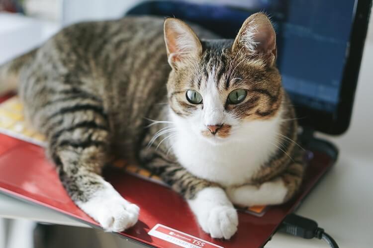 item-cat-jyama
