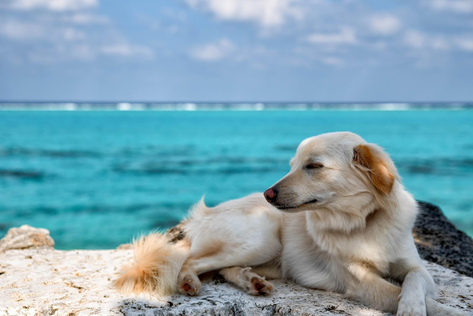 animal-dog